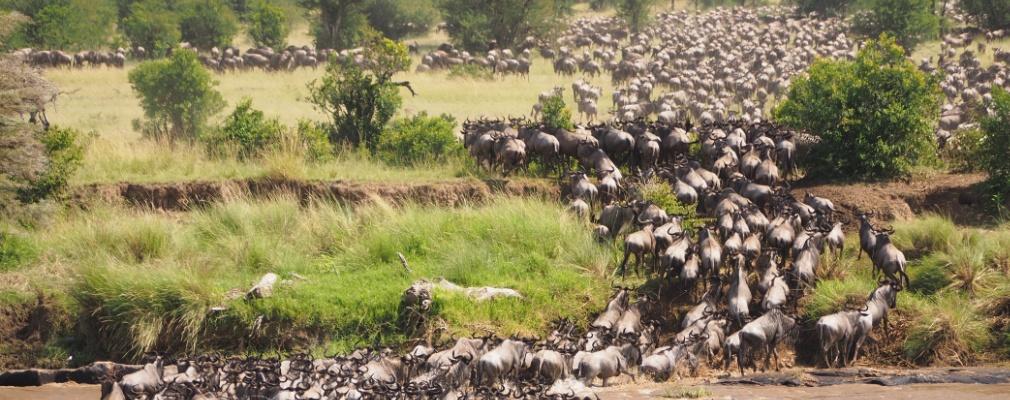 Die große Tierwanderung Serengeti - Masai Mara